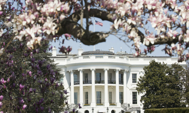 It is a picture of the White House surrounded by trees. A branch of cherry blossoms is at the top of the photo.