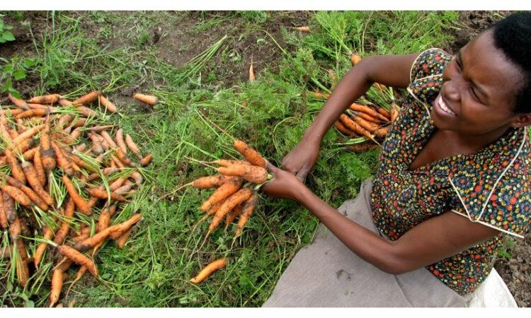 Woman bundling carrots (Echoing Green NYC/Flickr)