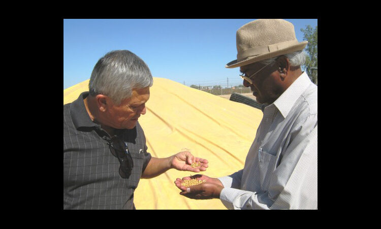 Two men standing in front of pile of wheat holding handfuls of grain (Courtesy of World Food Prize)