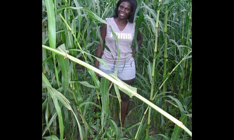 Rachel Kalipi among tall millet plants (Courtesy photo)