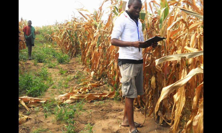 Man holding clipboard standing next to rows of maize (Courtesy of Abdala Liingilie)