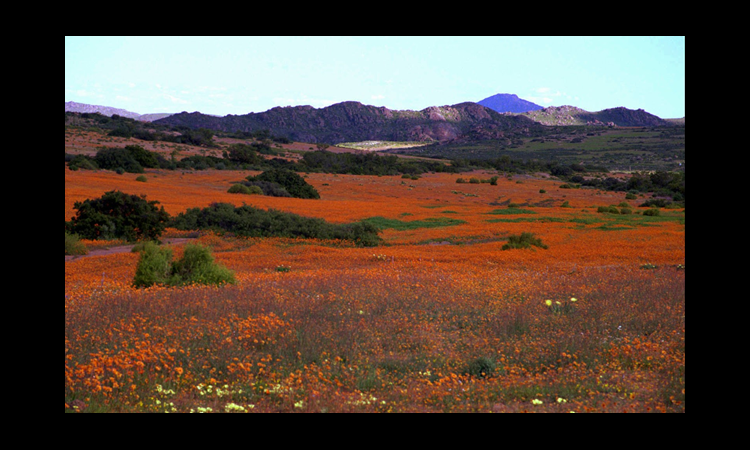 Namaqualand in South Africa (© AP Images)