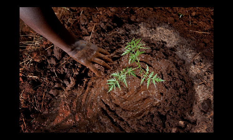 Hand reaching toward newly planted, small tree (© AP Images)