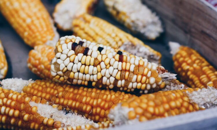 A Changing Environment And Maize In Cameroon