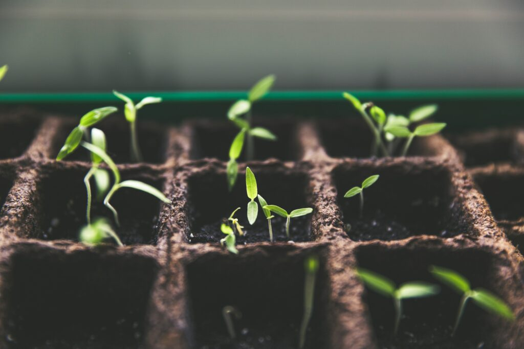 How Local Farmers Can Turn Seeds Into A Global Impact