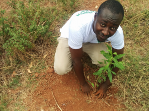 Man kneeling to plant a tree and looking up