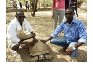 Two men squatting next to a large turtle (Courtesy of Faye Ndiaga)