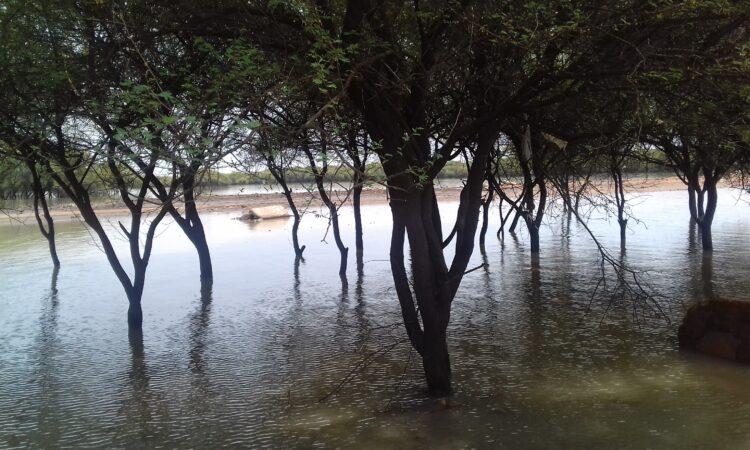 Sunut Forest, Khartoum