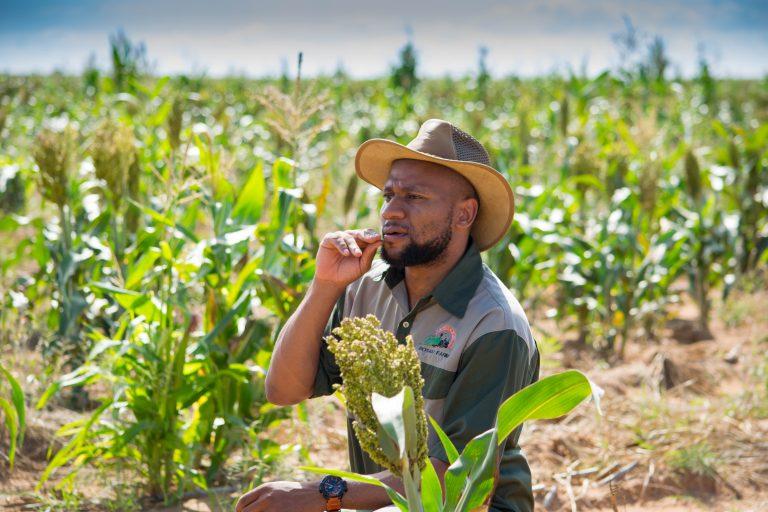 Edward in a crop field