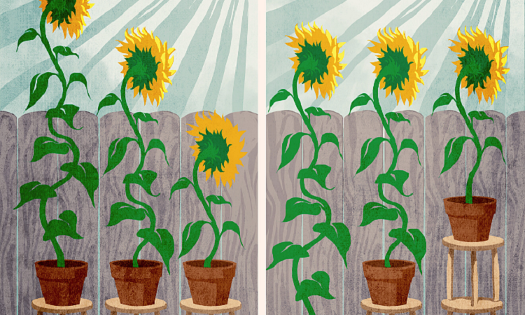 painting of sunflowers